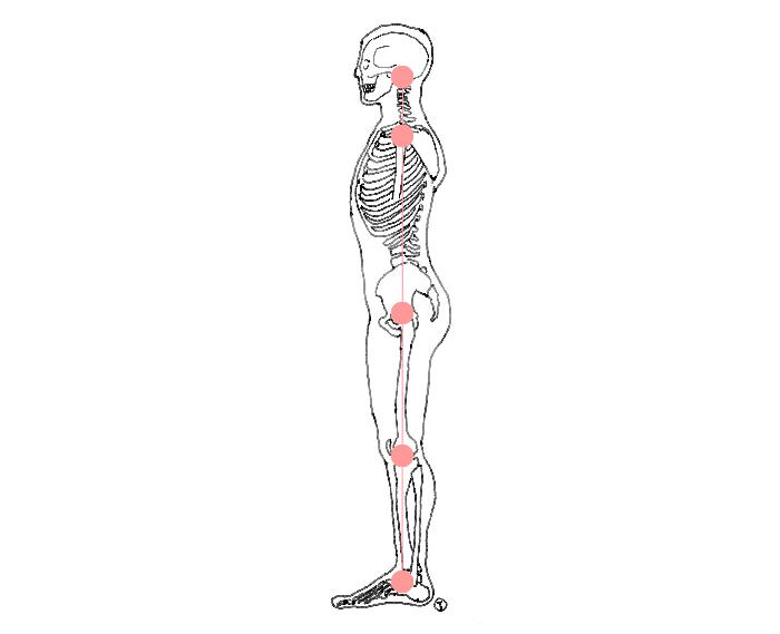 骨格2.jpg