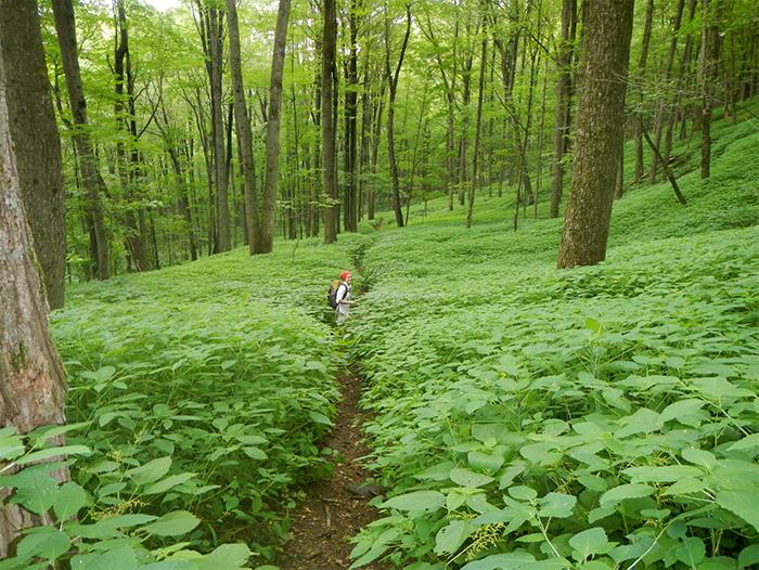 Section-Appalachian-National-Scenic-Trail-Massachusetts-Berkshire.jpg